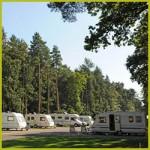 Thetford Forest Caravan Club Site - Thetford